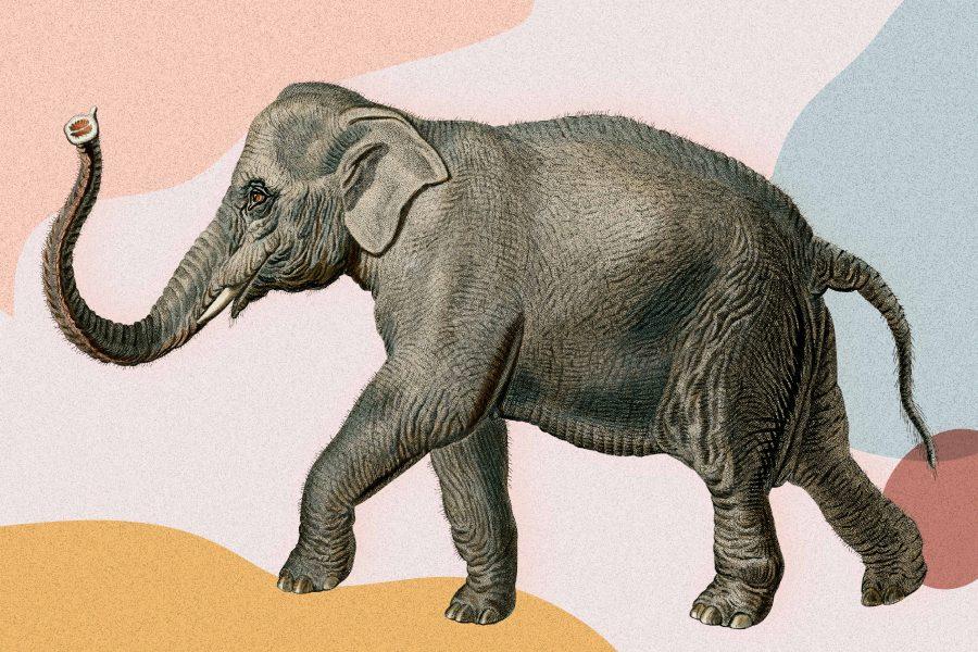 50 Animal Trivia Questions