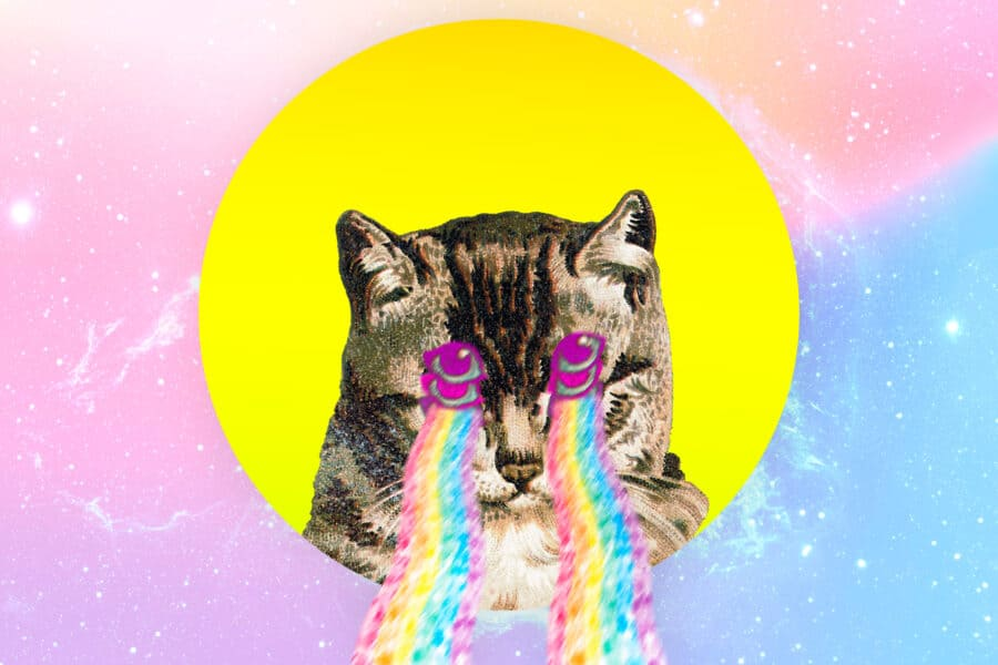 80 Fun & Funny Names for Cats