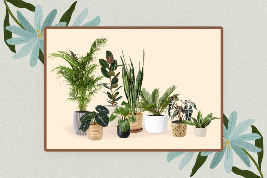 50 Cute Plant Names For Your Plant Baby